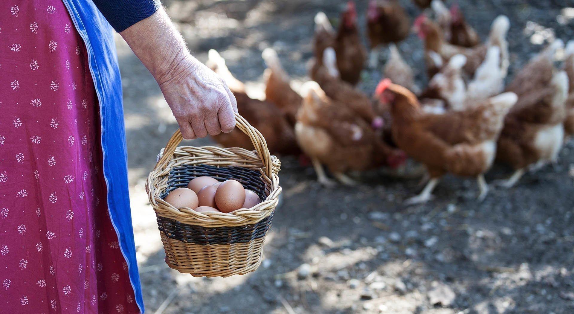 Bauernhofurlaub mit Frühstück