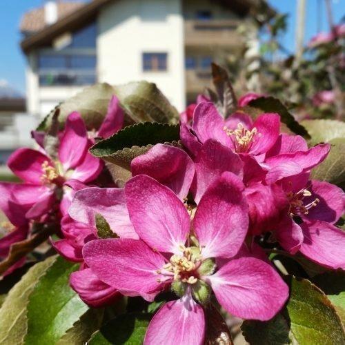 Impressioni del Waldharthof di Naz-Sciaves e dintorni
