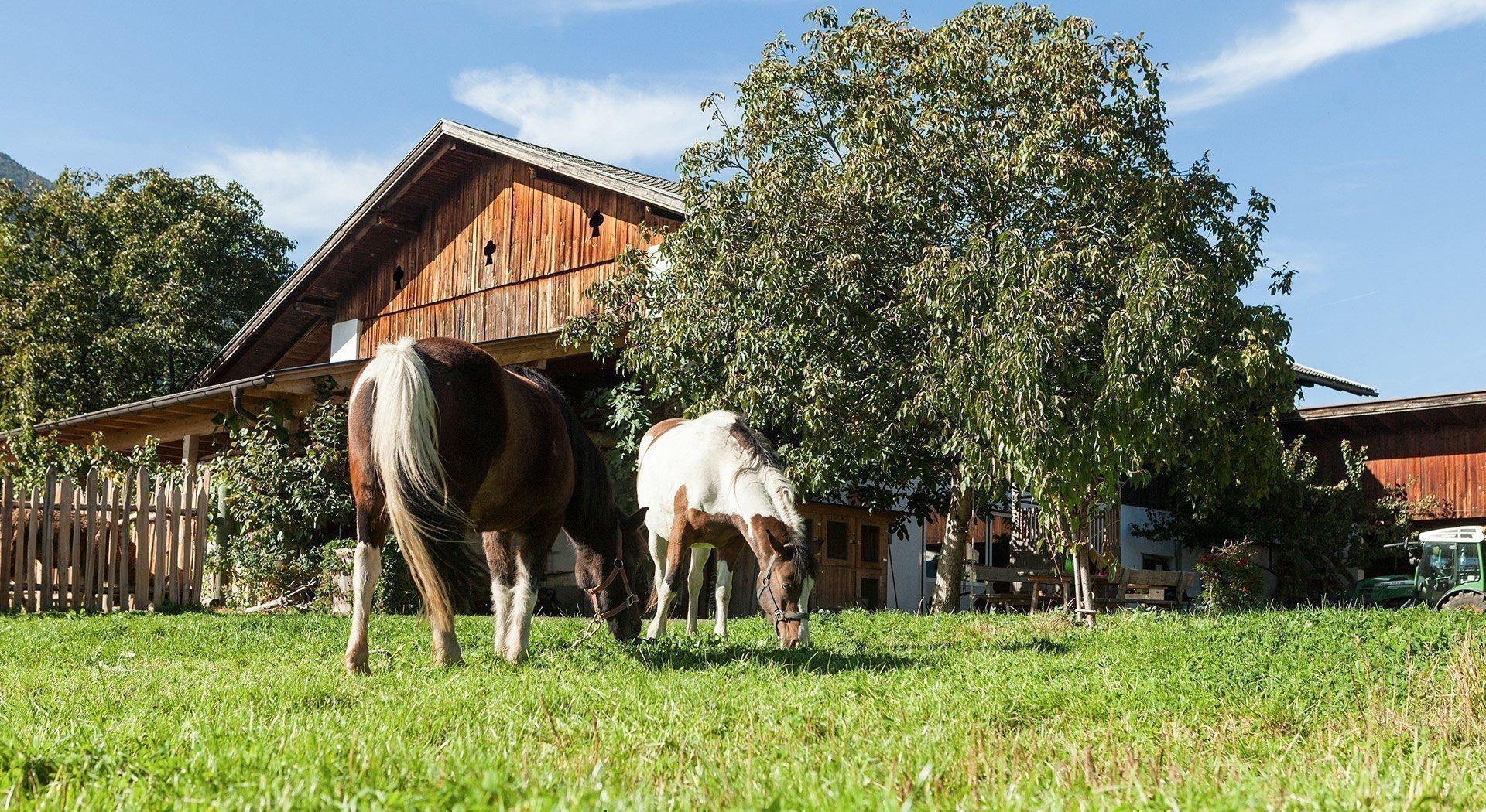 Urlaub auf dem Bauernhof in Südtirol / Schenna